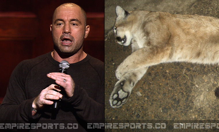 empire-sports-joe-rogan-kills-moutain-lion-comedy-club-icehouse-california-dead